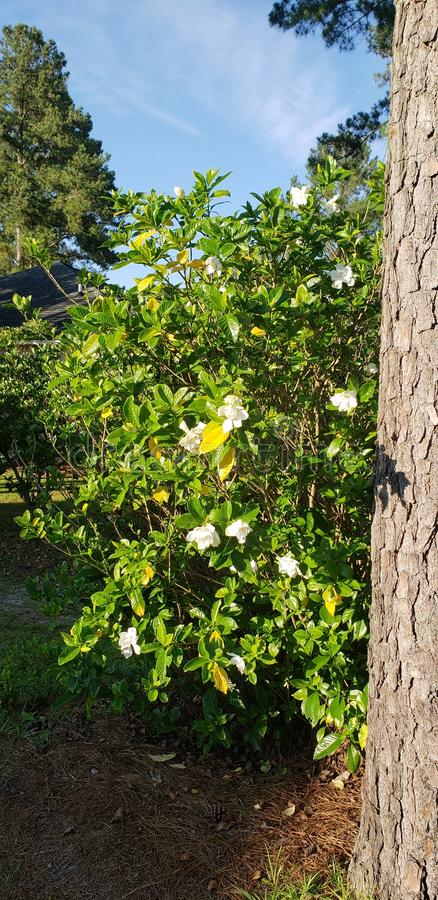 White flower growing next to tall tree royalty free stock images