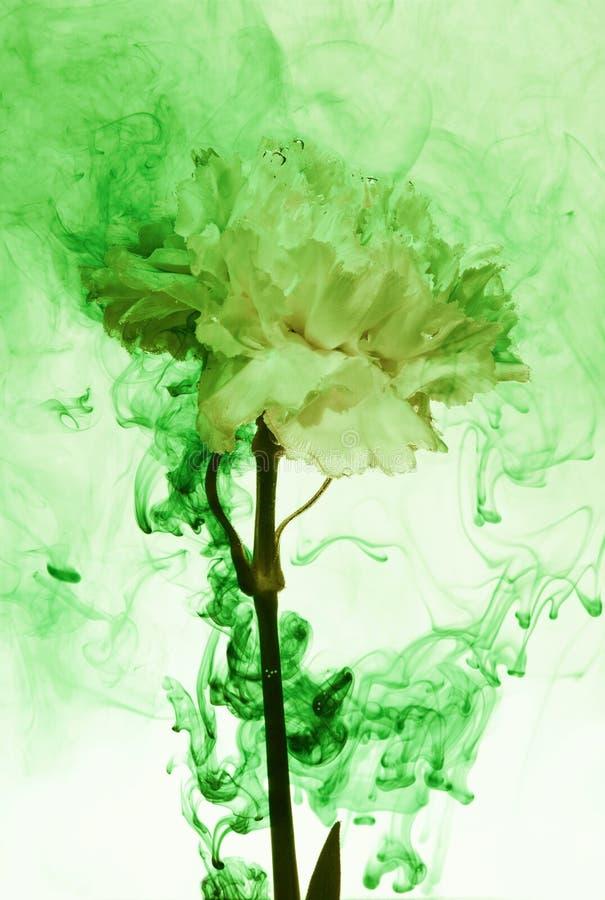 Free White Flower Inside Water Green Background Flowers Under Paints Smoke Steam Blur Carnation Ufo Stock Photos - 143614203