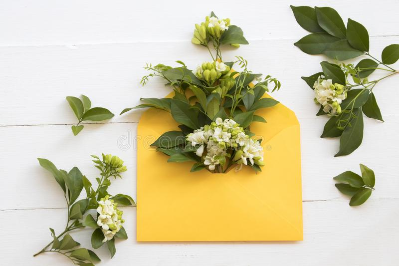 White flower jasmine local flora of asia in yellow envelope. Arrangement flat lay style on background white stock photography