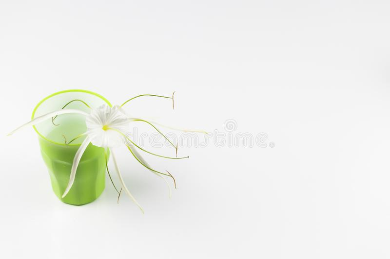 Flower in a glass. White flower kept in a glass for wallpaper and greetings stock photo