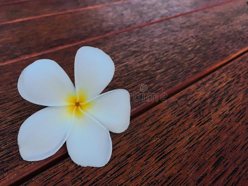 White flower. A little white flower royalty free stock images