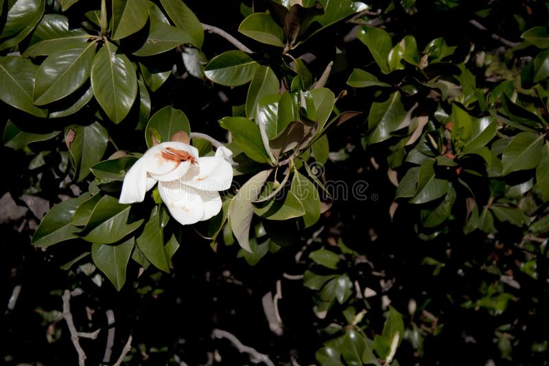 White flower in the middle of the plants stock photography
