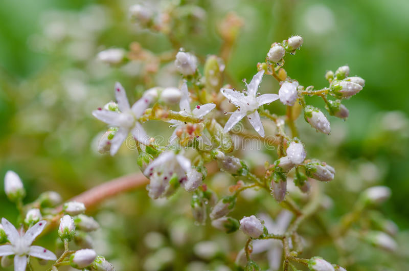White flower moss. Floral background with abstract white flower moss royalty free stock photography