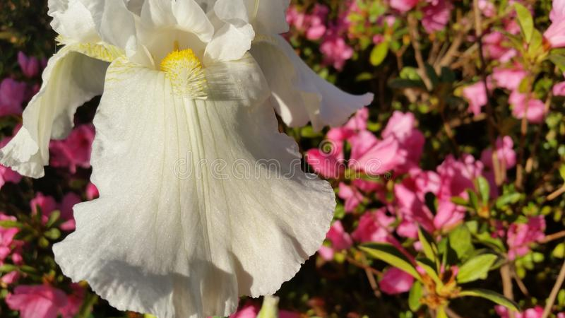 White Flower. Photo taken of a flower in the sunlight stock images