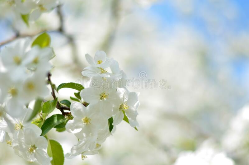 White Flower Picture during Daytime stock images
