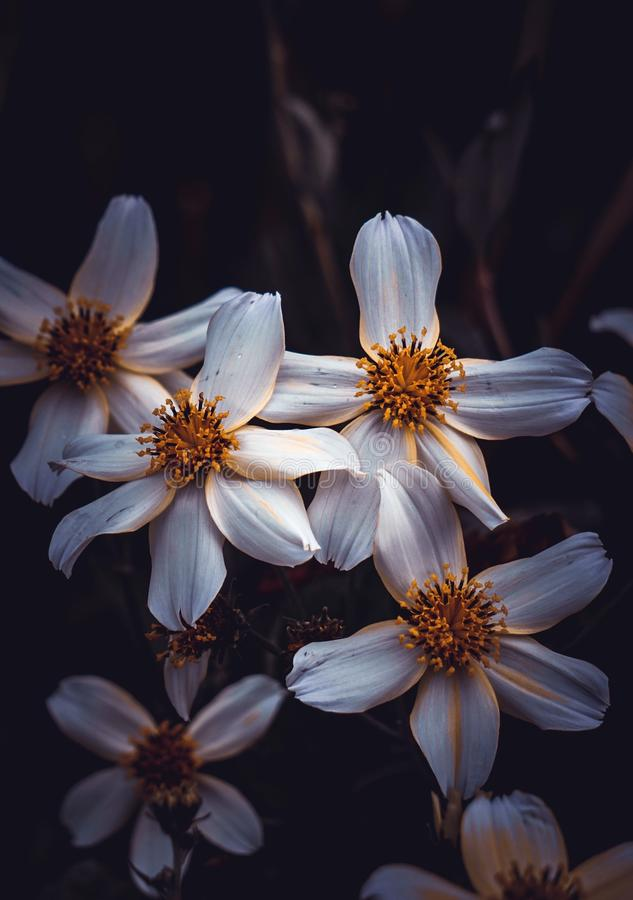 White flower plant in the garden in springtime. White flower in the nature royalty free stock photos