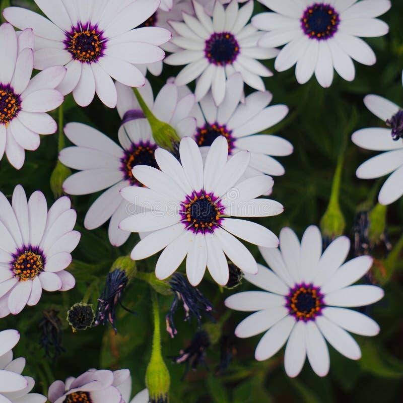 White flower plant in springtime. In the garden stock photos