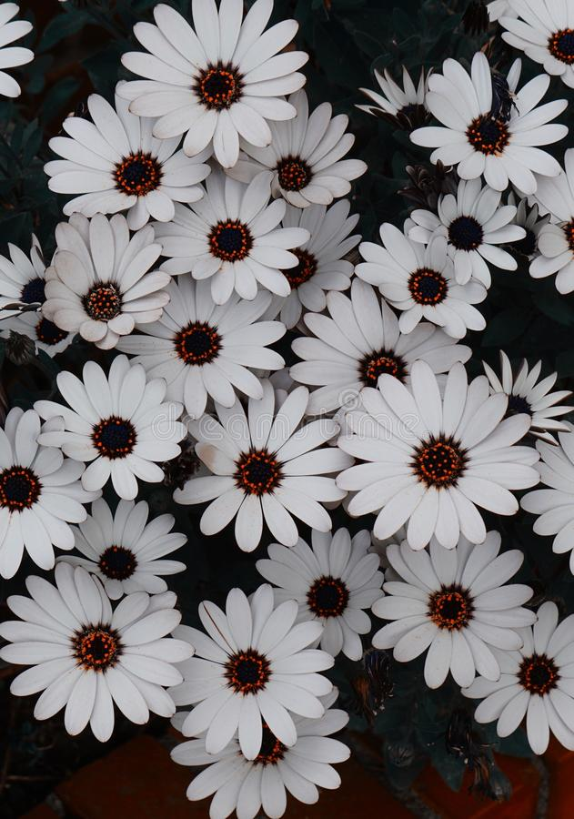White flower plant in springtime. In the garden royalty free stock photos