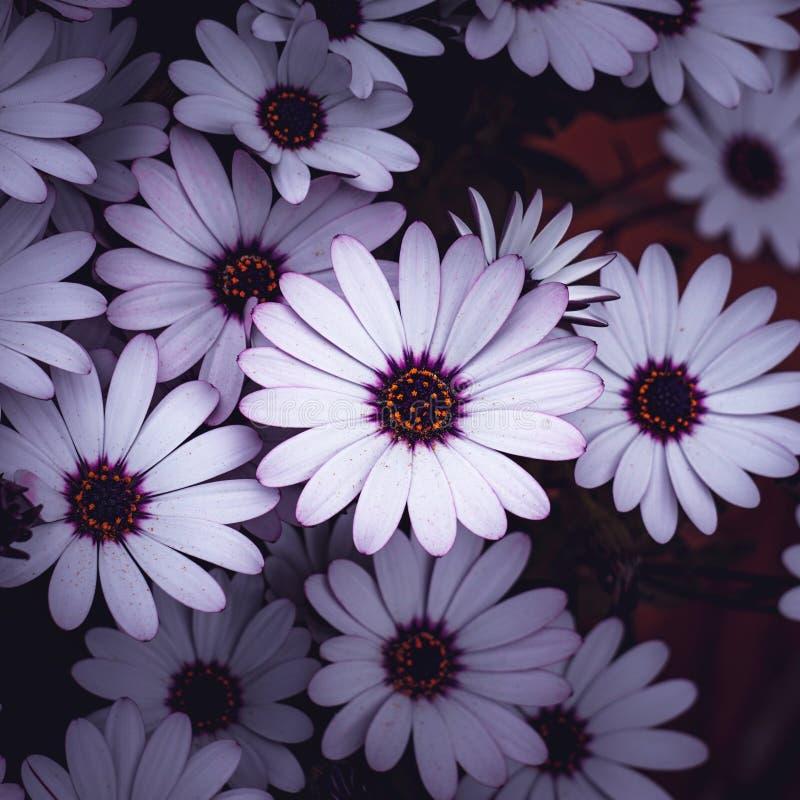 White flower plant in springtime. In the garden stock photo