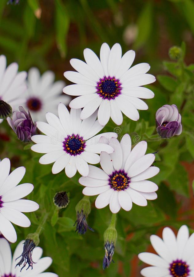 White flower plant in springtime. In the garden stock image