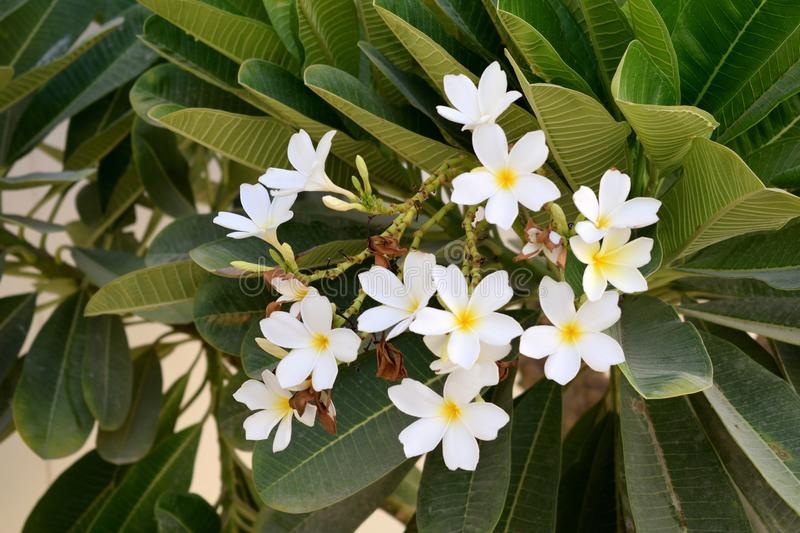 White flower and plant. Green plant stock image