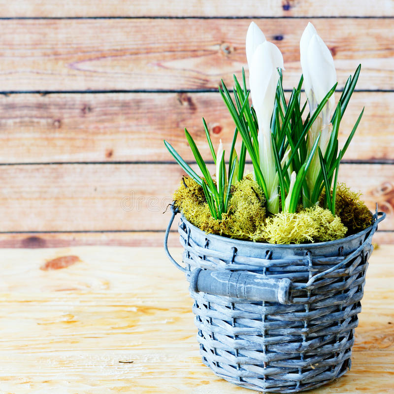 Download White Flower In A Pot Royalty Free Stock Photo - Image: 38156985