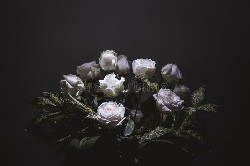 White, Flower, Rose Family, Still Life Photography stock photos