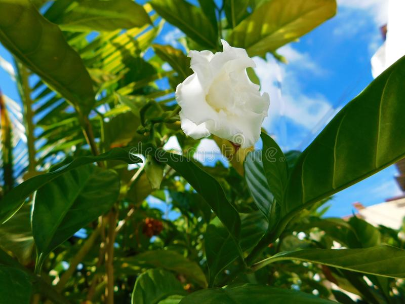 White flower with the sky as background. Image of a little white flower at sunlight with the blue sky as background stock image
