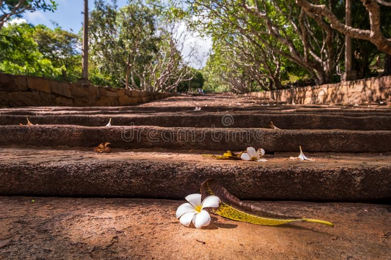 White flower on staircase to the Buddhist Monastery in Mihintale royalty free stock image
