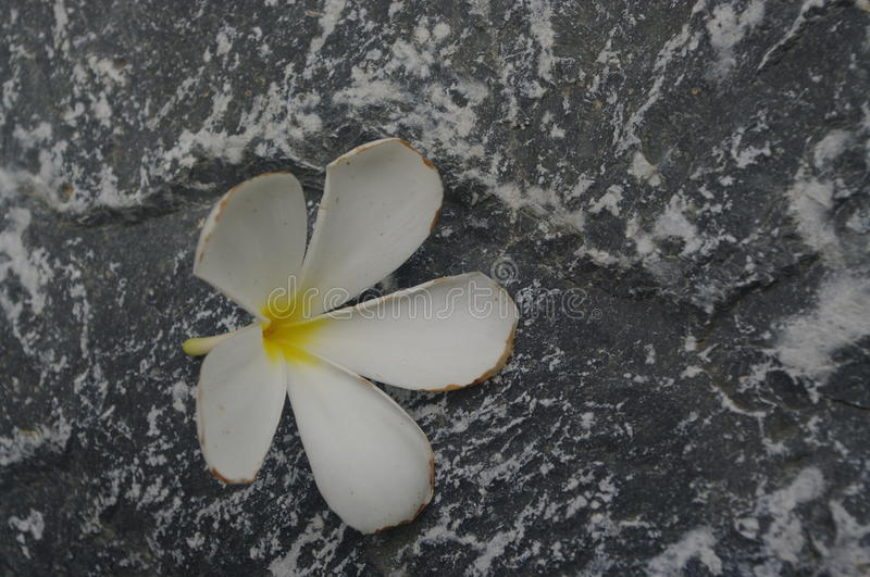 White flower on stone surface background royalty free stock images
