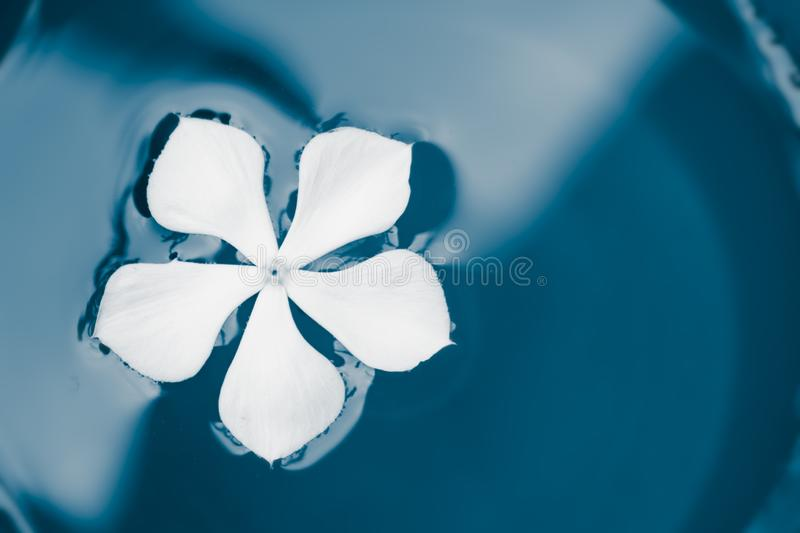 White flower swimming in teal paint royalty free stock photos
