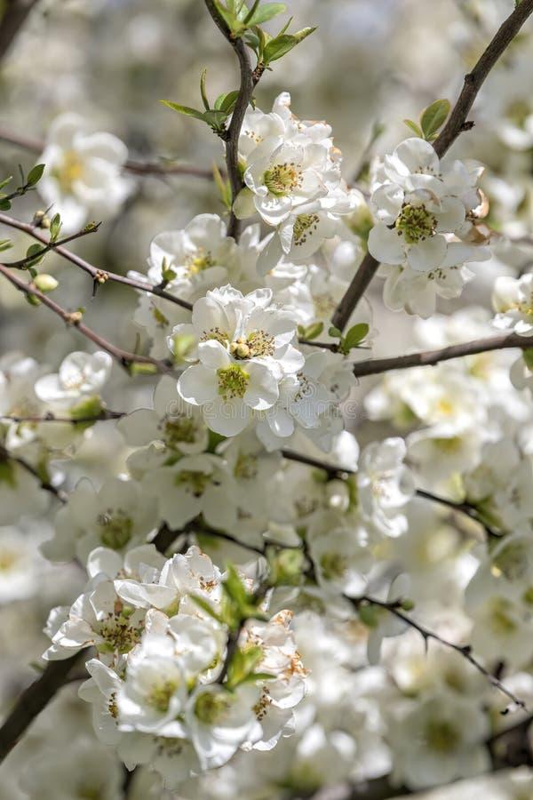 White flower on the tree stock photos