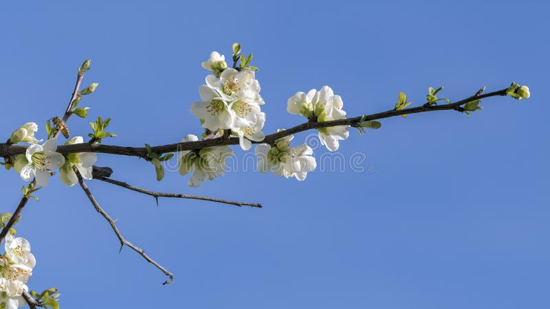 White flower on the tree stock photo