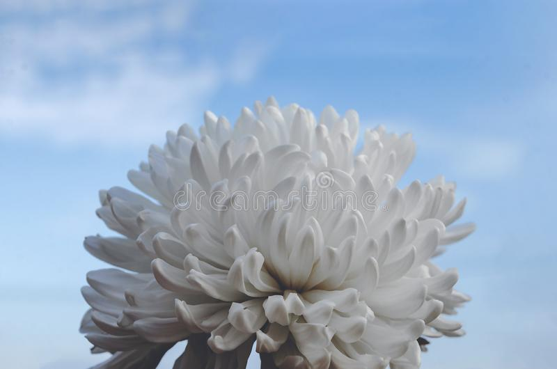 White flower Unknown type on sky background.  stock image