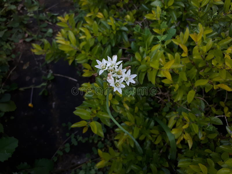 White flower royalty free stock images