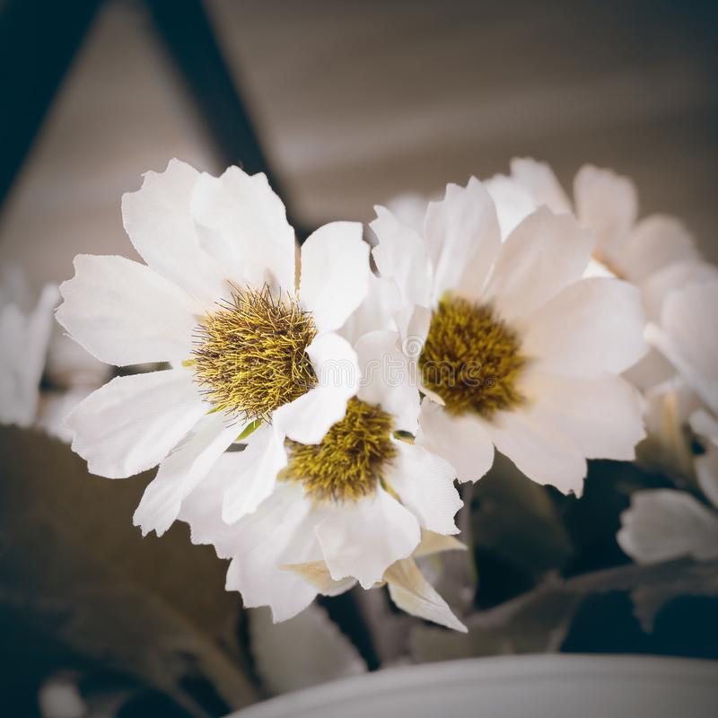 White flower and vintage tone concept. Flower royalty free stock image