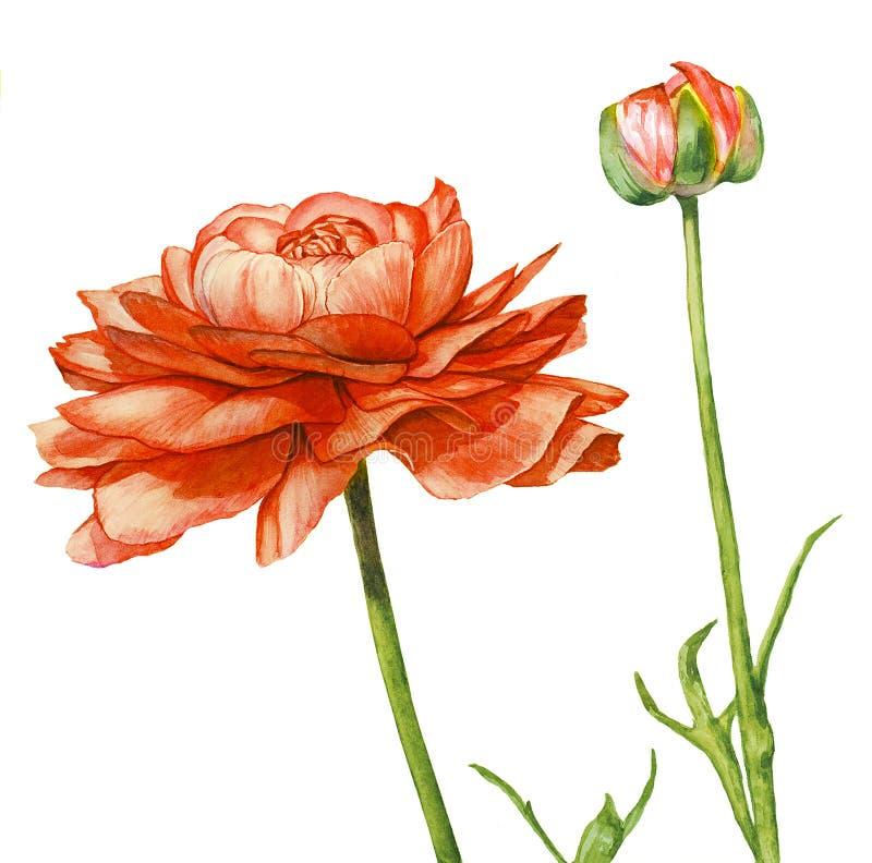 Red flower royalty free illustration