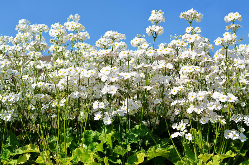 White Flowerets (sky Background) Stock Photo - Image of bloom ...