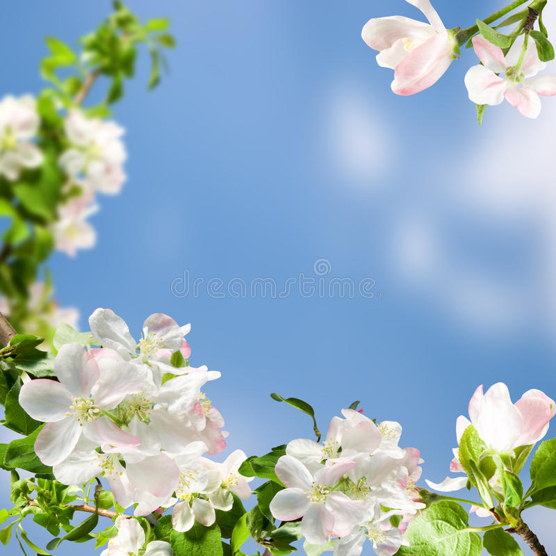 Free White Flowers Stock Photography - 19650452