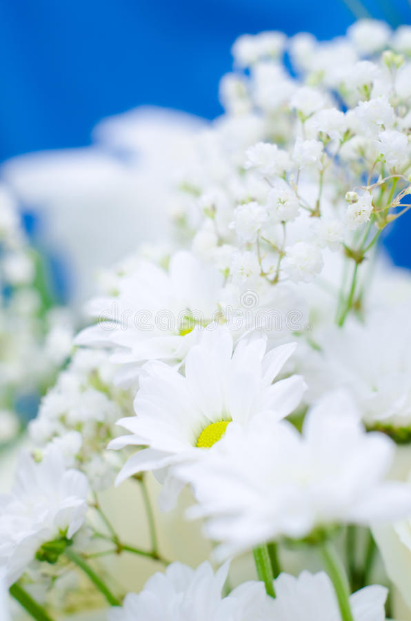 White flowers. Beautiful white flowers , pretty simple bouquet, nice spring and odoriferous flowers with yellow pestle stock image