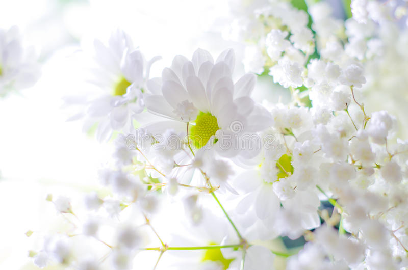 White flowers. Beautiful white flowers ,pretty simple bouquet, nice spring and odoriferous flowers with yellow pestle royalty free stock photos