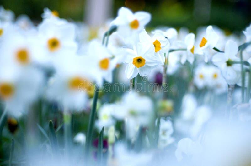 White flowers stock photos