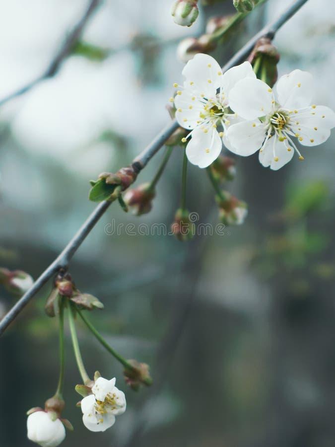 White Flowers royalty free stock photos