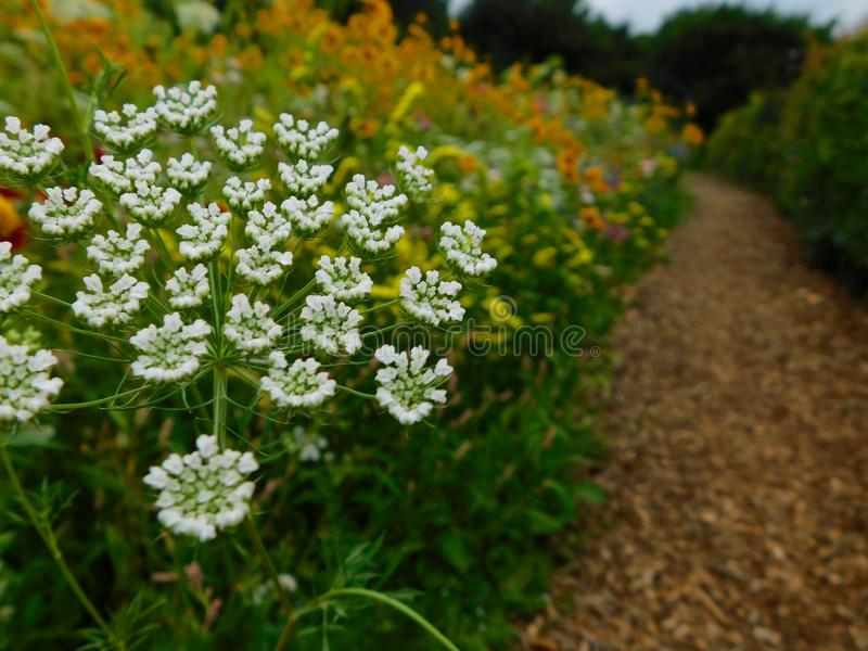 White flowers along garden path stock image
