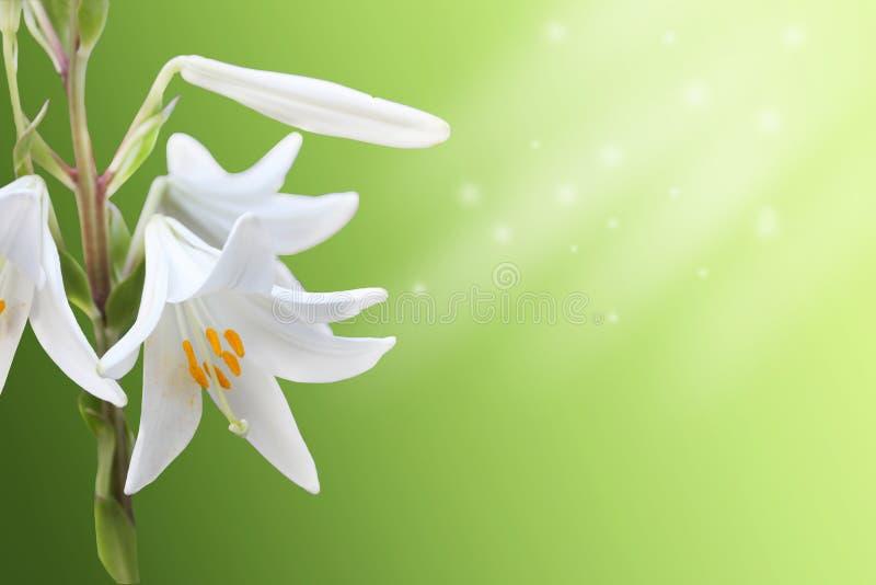 White flowers background stock image
