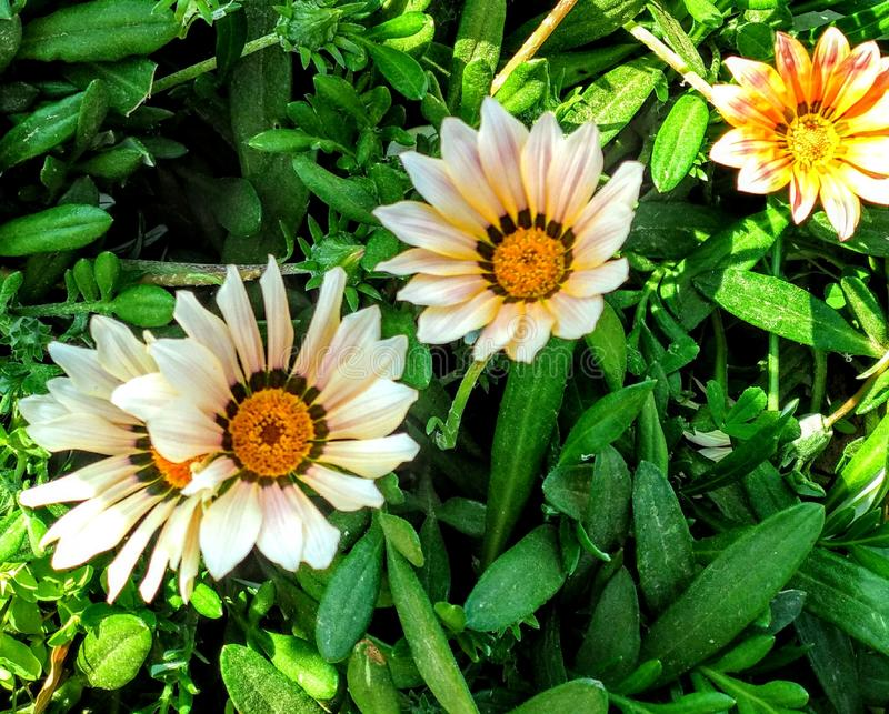 White flower bed stock photo