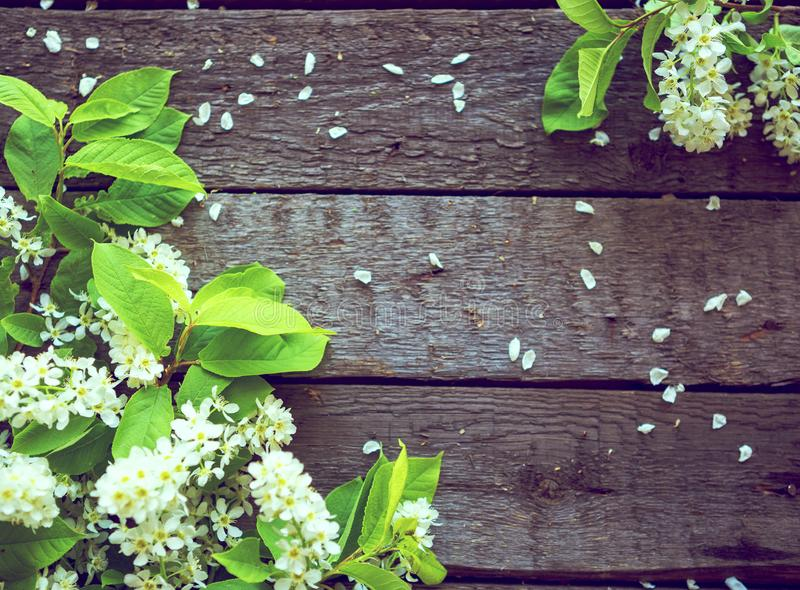 White flowers of a bird-cherry tree with green leaves against the wooden background stock photo