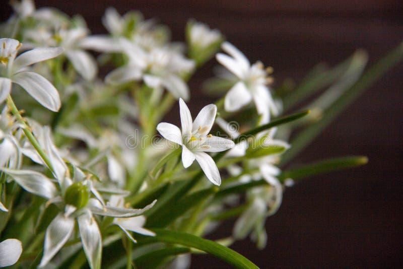 White flowers stock image image of good fragrance birdworm 94334401 download white flowers stock image image of good fragrance birdworm 94334401 mightylinksfo