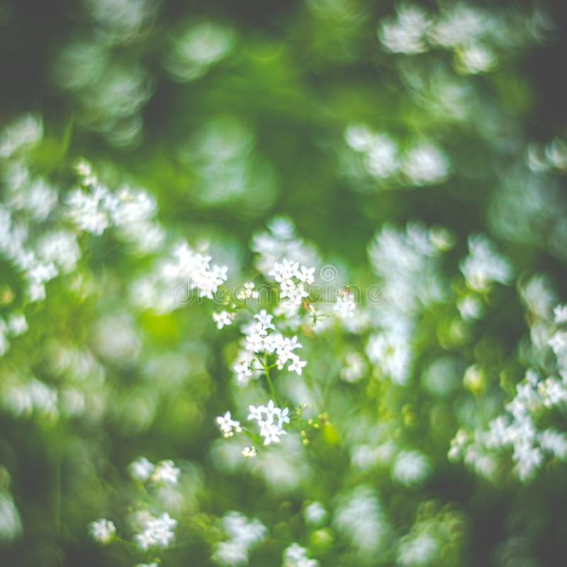White flowers blooming in forest stock image