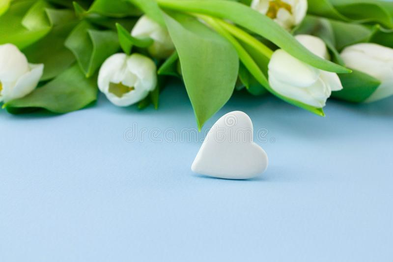 White flowers on blue background. Valentine`s Day background with bouquet of tulips and stone in the form of heart or abstract royalty free stock image