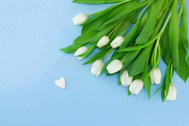 White flowers on blue background. Valentine`s day background with bouquet of tulips and stone in the form of heart, card for royalty free stock image