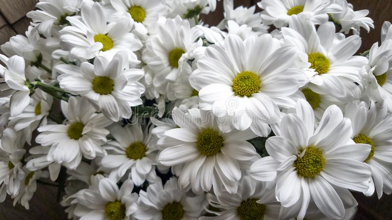 White flowers. stock images