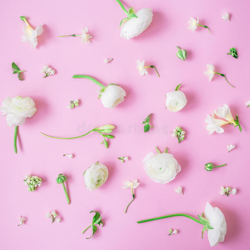 White flowers and buds on pink background. Flat lay, top view. Floral lifestyle composition. White flowers and buds on pink background. Floral lifestyle stock image