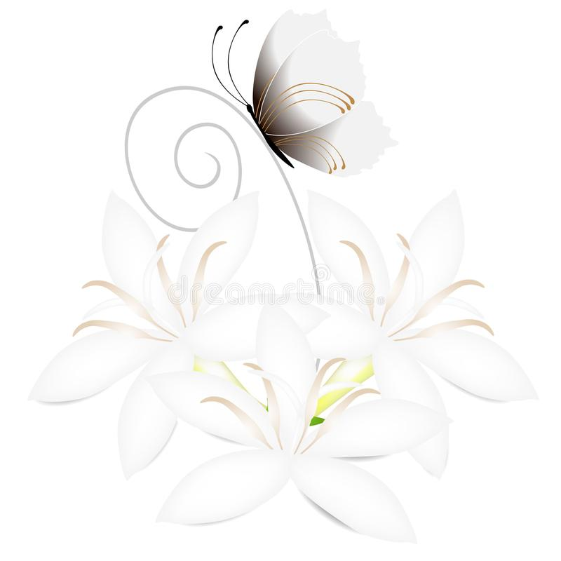 White flowers of coffee tree with butterfly isolated on white background. stock illustration