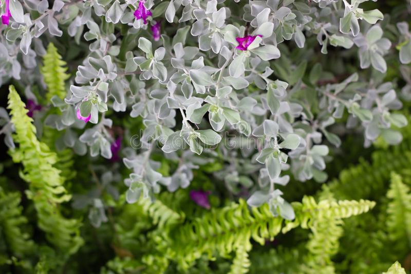 White flowers on fern leaves in the garden. Nature concept. Natural background stock photos