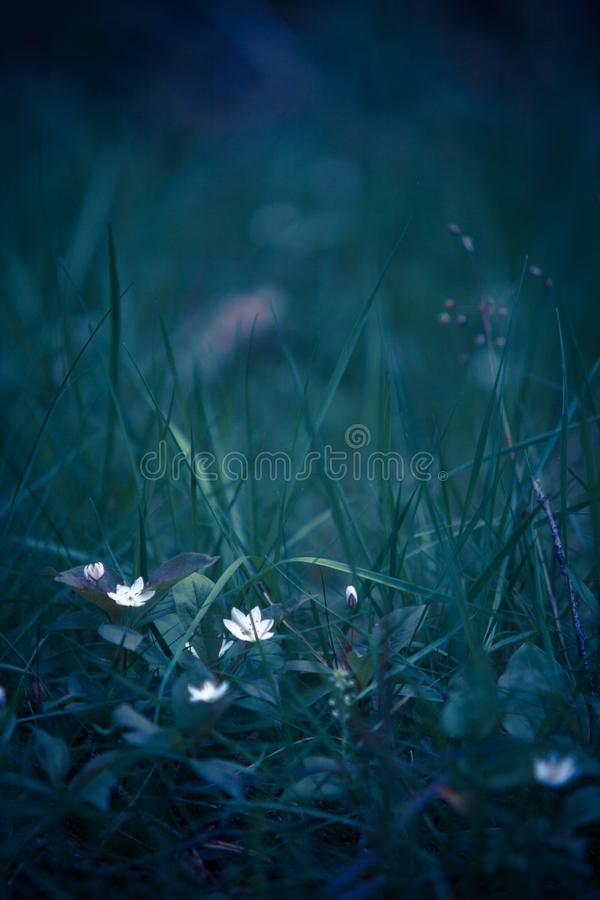 White flowers in field stock photos