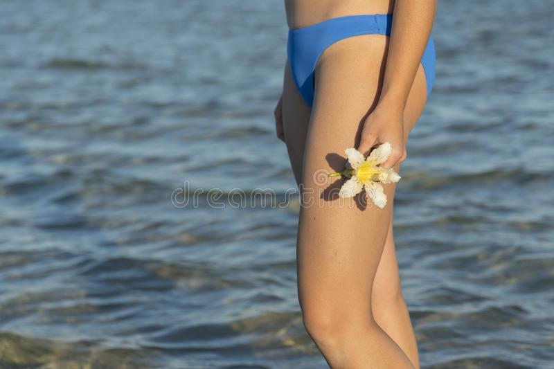 White flowers frangipani in women's hands against the sea beach and blue sky. Tropical flower Plumeria on the beach. Sea royalty free stock photos