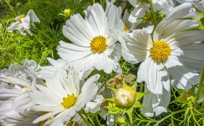 White flowers. Full frame sunny illuminated white flowers closeup stock photography