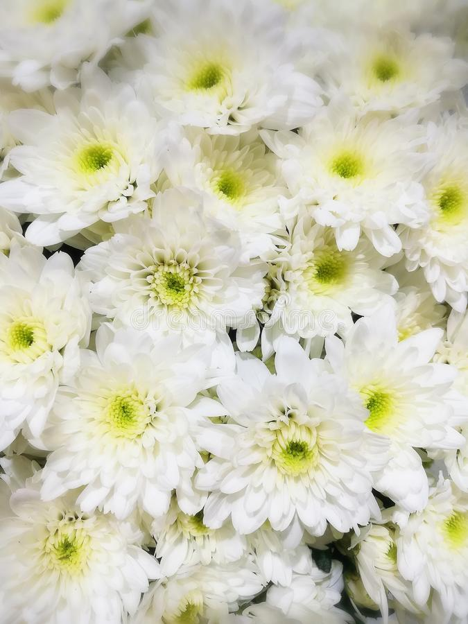 White flowers garden gardenflower natural holidays travel background trip stock images