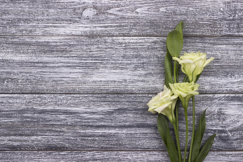 White flowers on a gray wooden background. Valentine day.Wedding.Greeting card. royalty free stock photo